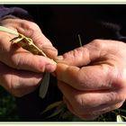 Les mains du Gorges V. inspectant un rameau d'olivier