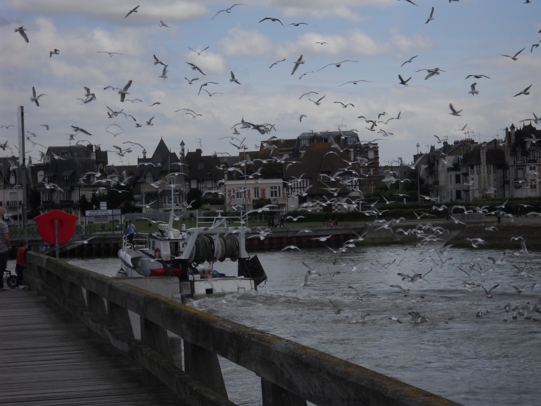 Les mouettes arrivent près d'un bâteau de pêcheurs