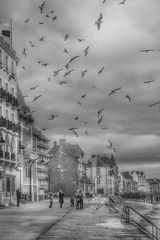 Les mouettes de Saint Malo