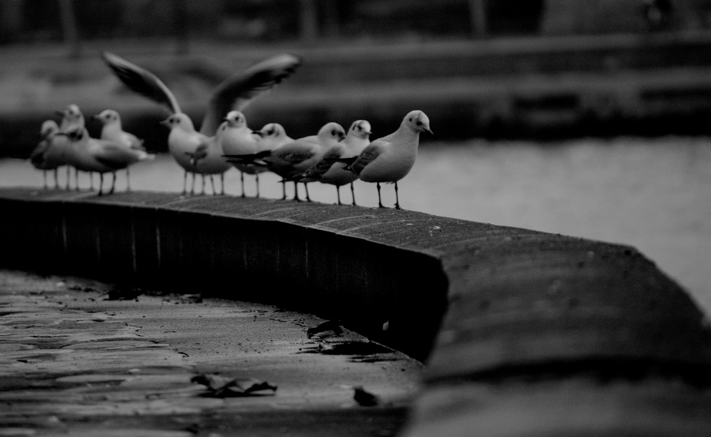 Les oiseaux 1