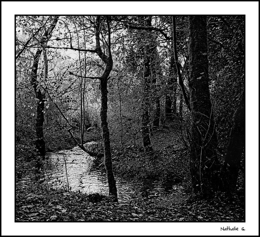 Les ombres de la forêt