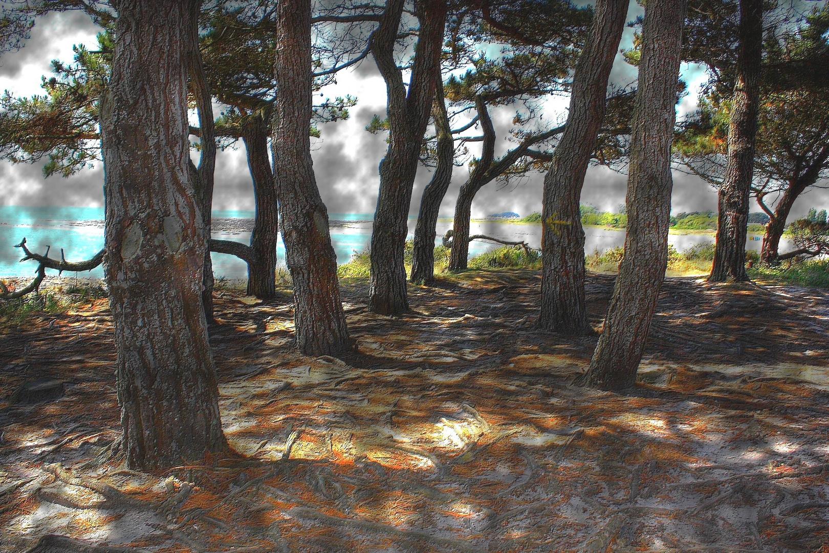 Les pins du Golfe