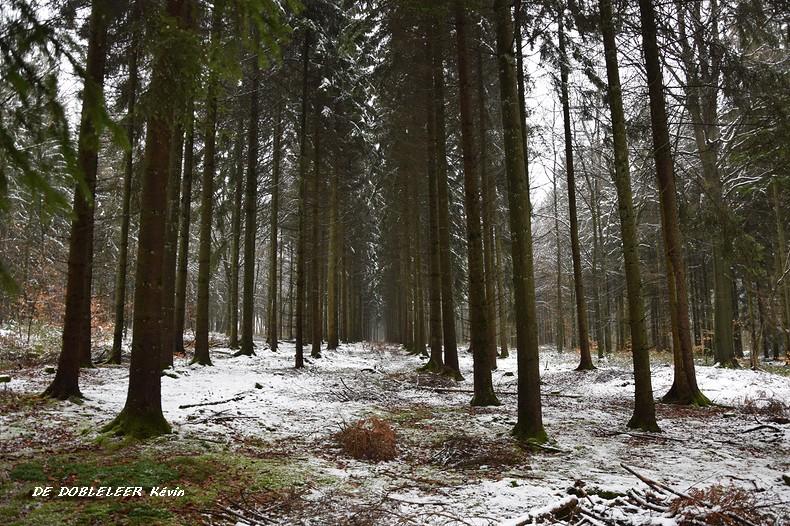 Les pins en blanc