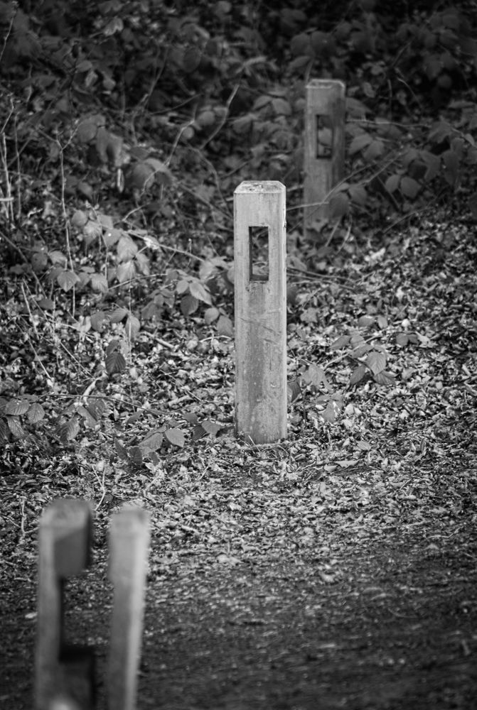Les poteaux de bois