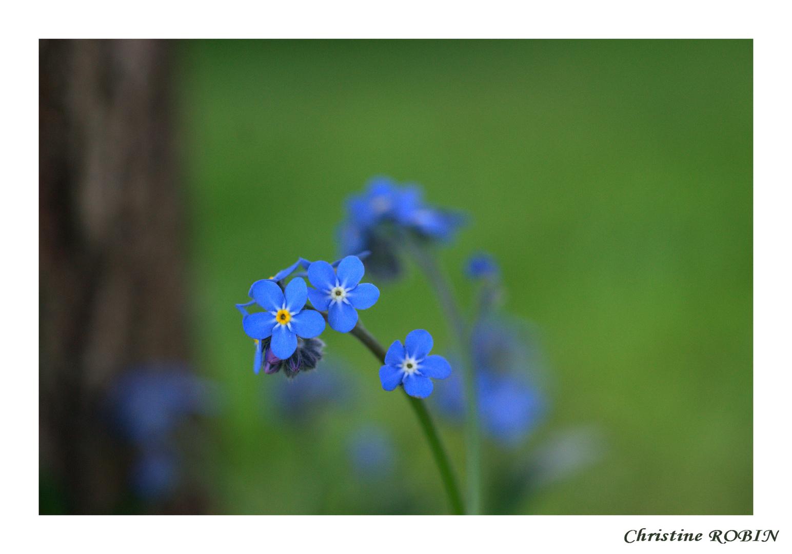 Les ptits bleus.