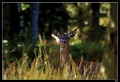 ...Les yeux de la forêt...