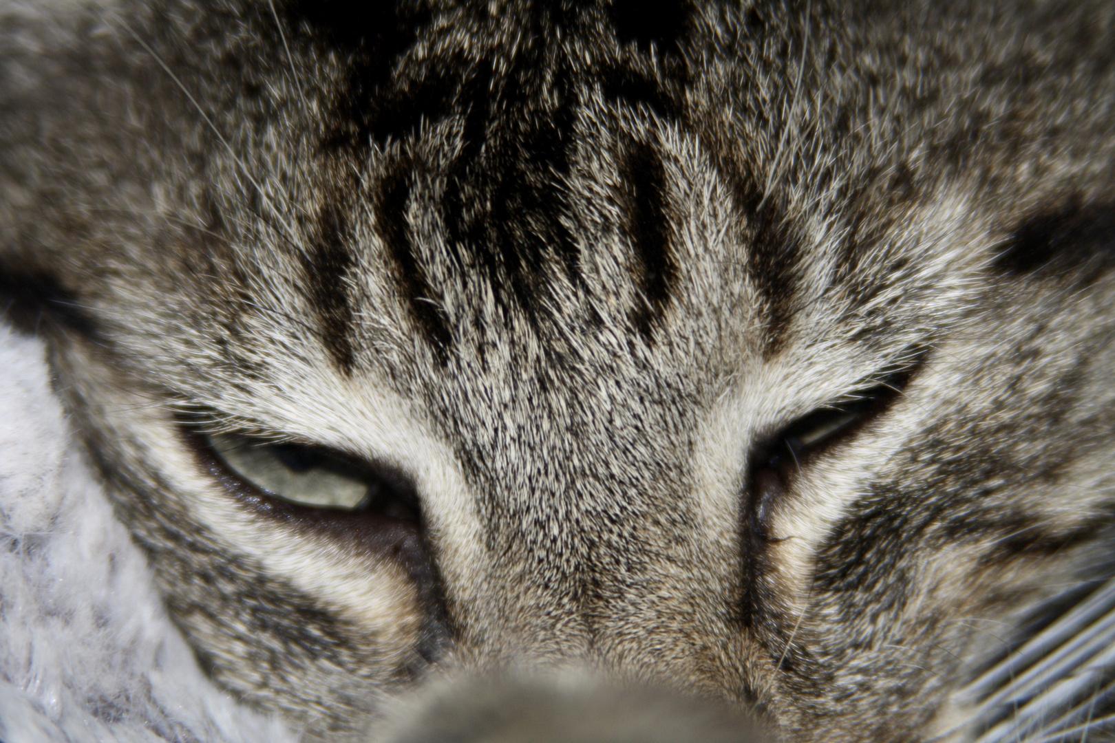 Les yeux de Minet