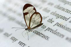 lesender Schmetterling !!!
