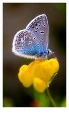 Lesezeichen für HaDis Schmetterlingsbuch