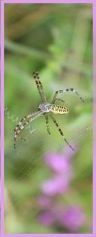 Lesezeichen für Spinnerte