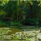 L'étang avec les nénuphar