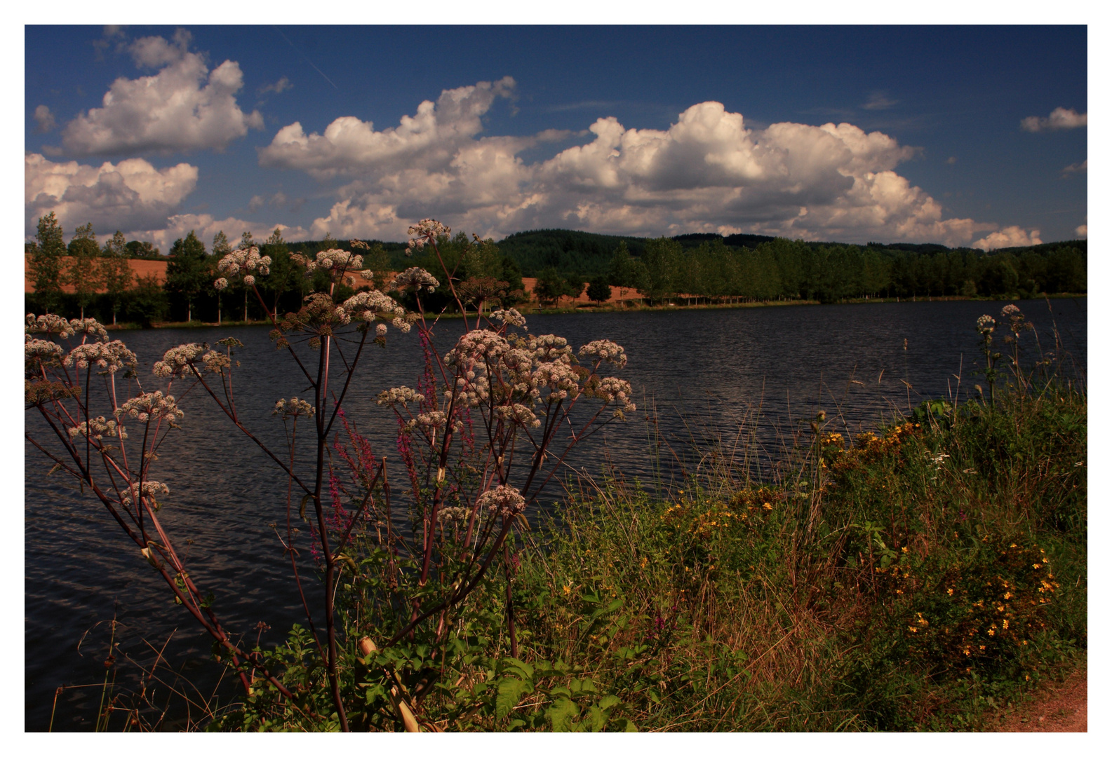 L'étang de Beaubery