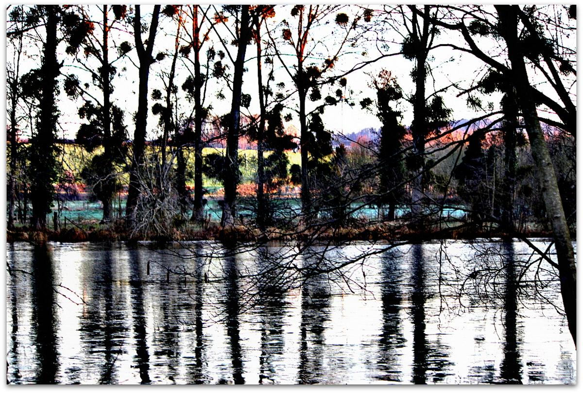 l'étang latent attend que passe le temps..