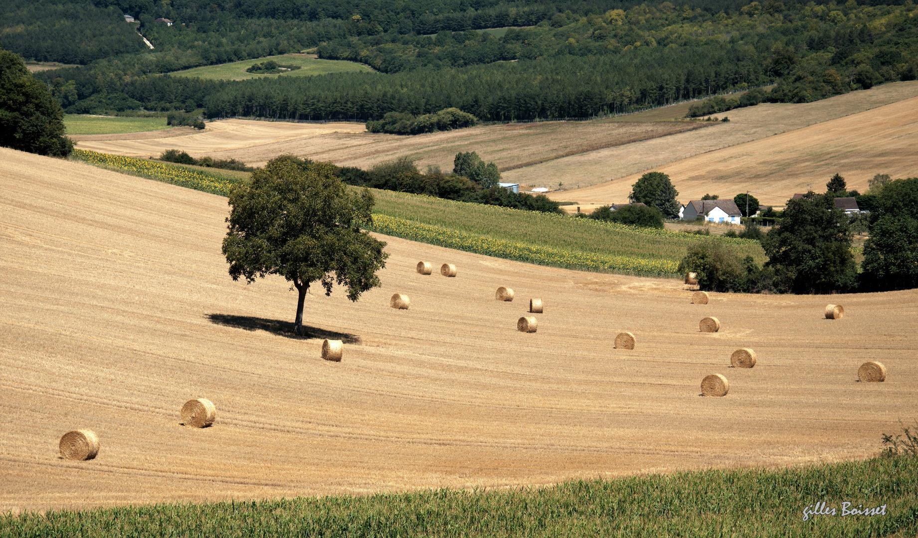 L'été en pente douce dans le Vexin normand