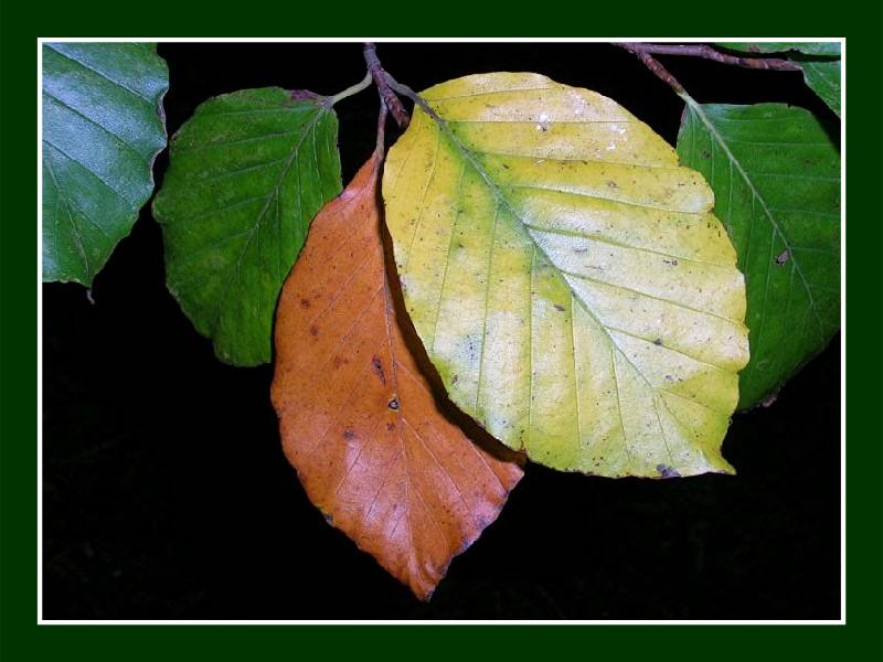 L'été se termine, l'automne arrive en douceur avec ses jolies couleurs