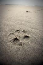 Let's take a walk together!