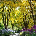 Let's take a walk under the Golden Rain