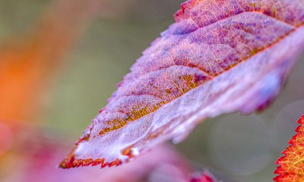 letzte Blätter