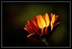 Letzte Blüte des Sommers