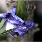 letzte Blüte