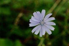 ...letzte Blüte