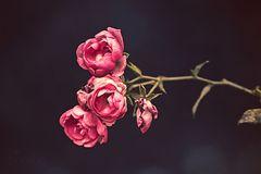 letzte Blüten des Jahres