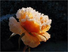 """Letzte Rose"""