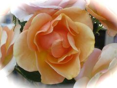 """""""Letzte Rose in meinem Garten"""""""