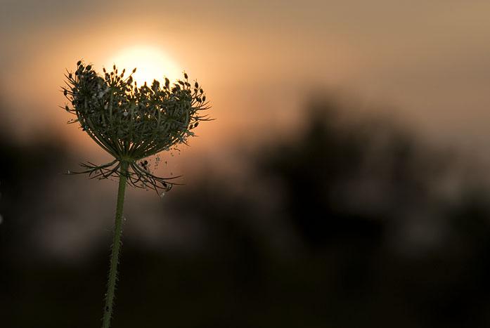 Letzte Sonne eingefangen