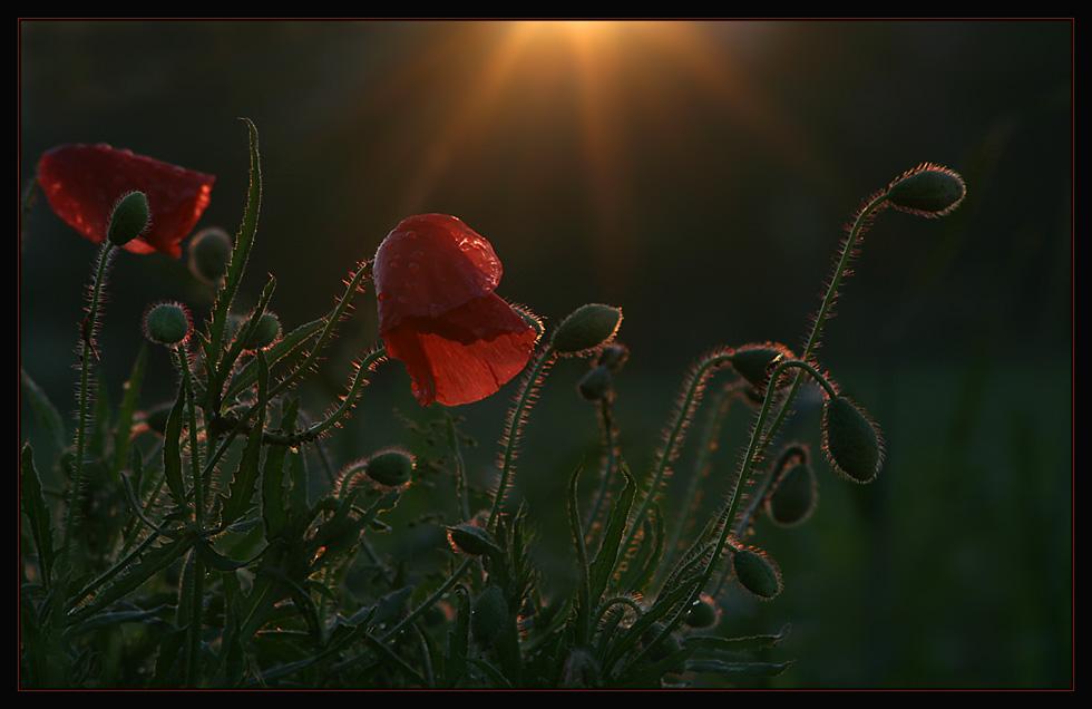 ...letzte Sonnenstrahlen