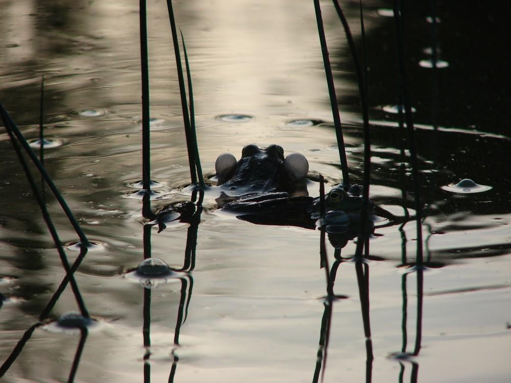 Letzten Sommer im Teich