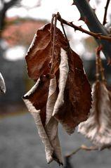Letzter Gruß vom Herbst