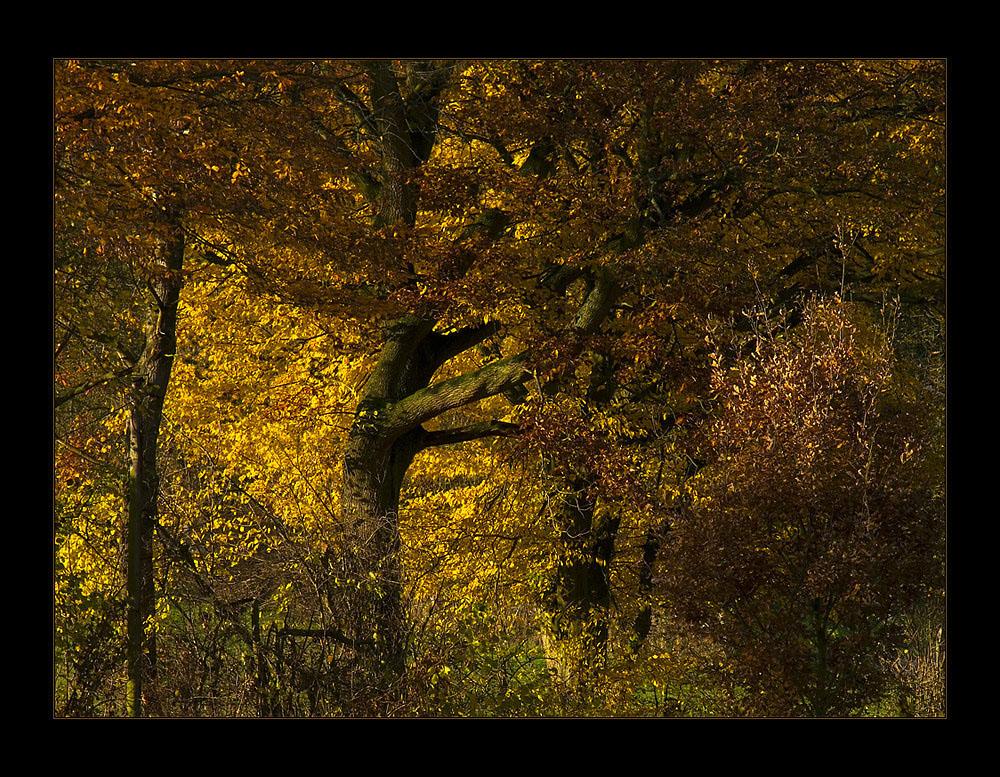 ...letztes Aufflammen... - oder: Herbst-Komposition (s. KOMPOSITIONS- ANALYSE)