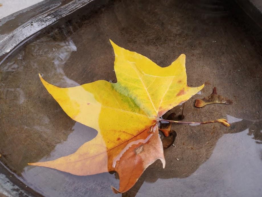 letztes Herbstblatt