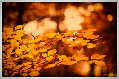 Letztes Herbstgold