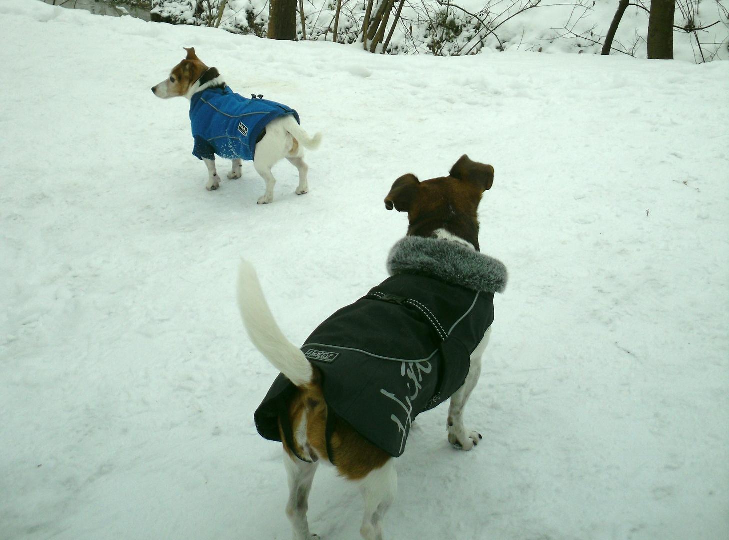 Letztes Jahr trugen die Hunde noch Mäntelchen....