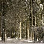letztes Winter Bild