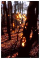 Leuchtbäumchen