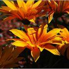 Leuchtblumen