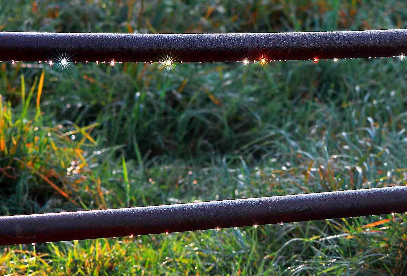 Leuchtdioden der Natur