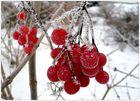 leuchten im Winter