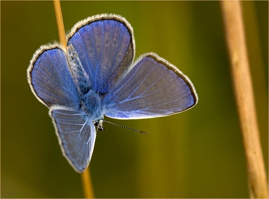 Leuchtend blau ...