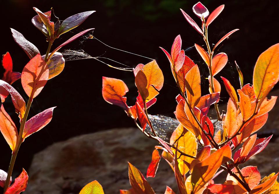 Leuchtend bunter Herbst