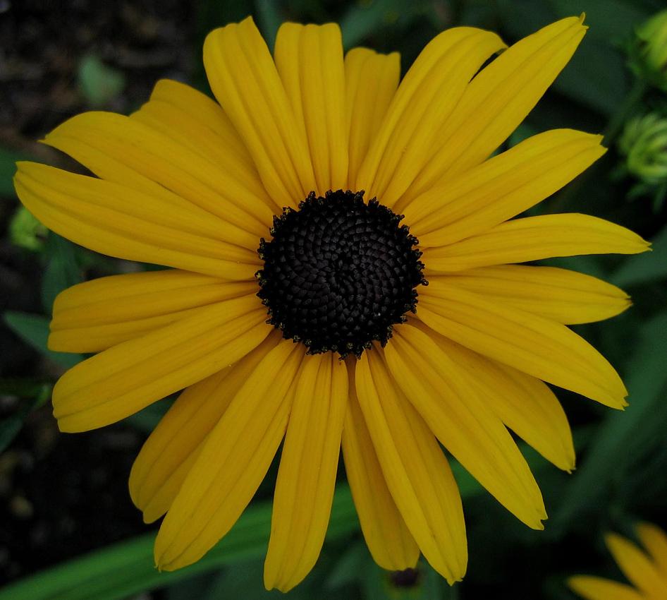 Leuchtend gelb