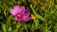 leuchtend lila