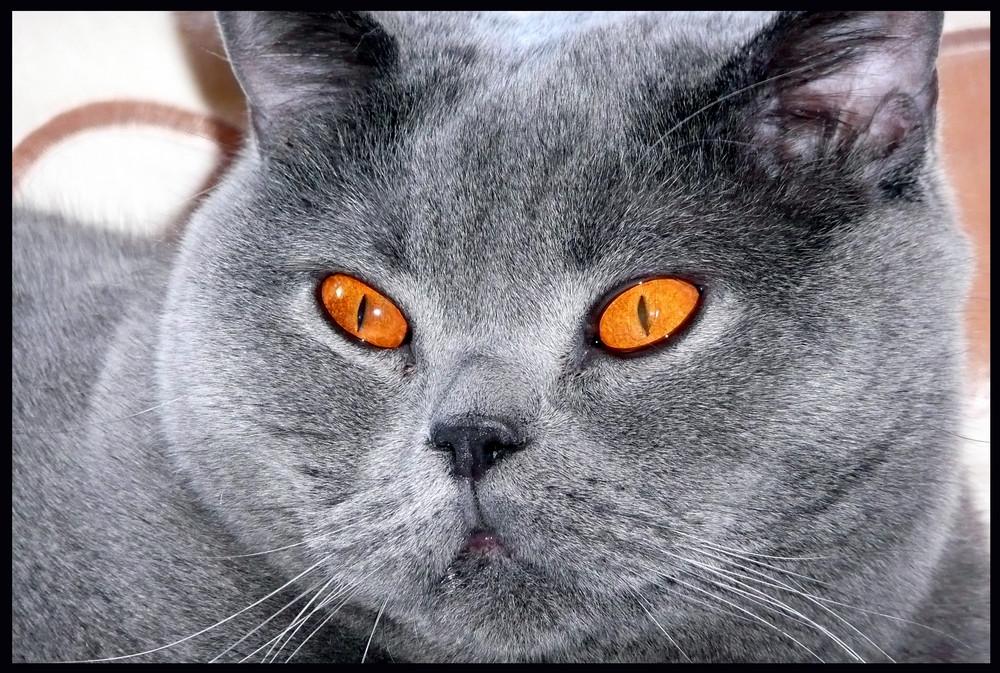 leuchtende Augen (leider muss man das Bild anklicken, für das es wirkt)