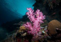 Leuchtende Bäumchen... Weichkorallen