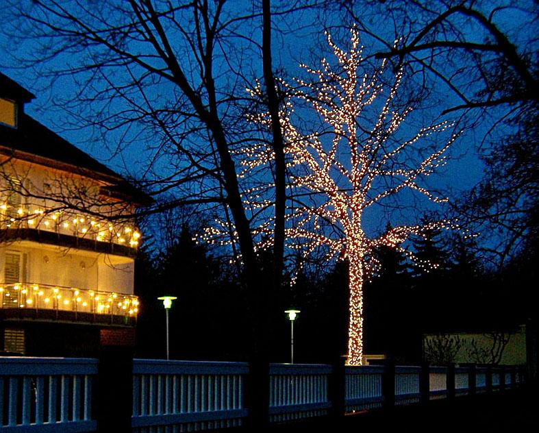 Leuchtende Bäume