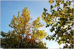 Leuchtende Baumblätter