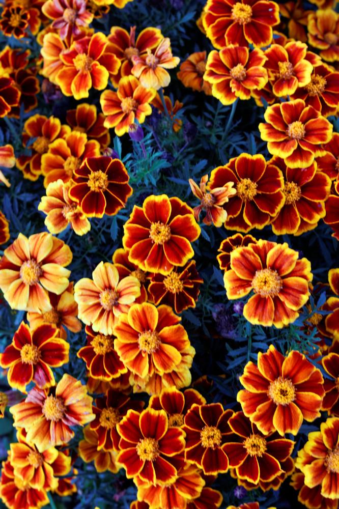 Leuchtende Blütenbracht